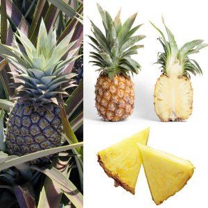 Balle Anti Stress Ananas